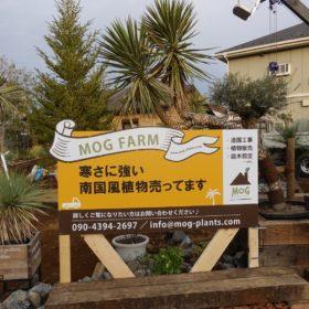 MOG FARM,南国風植物,看板立てました!